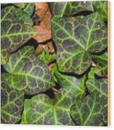 Fractal Ivy Wood Print