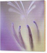 Fragrant Freesia  Wood Print