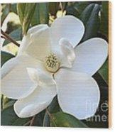 Fragrant Magnolia Wood Print