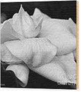 Fragrant Petals Wood Print