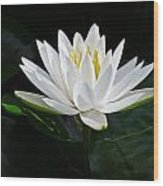 Fragrant Water-lily Wood Print