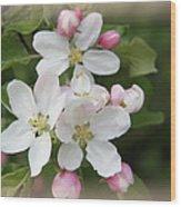 Framed Apple Blossom Wood Print
