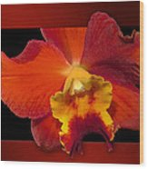 Framed Red Orchid  Wood Print