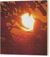 Framed Sun Wood Print