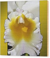 Framed White Orchid Wood Print