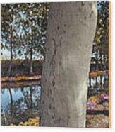 France Languedoc Roussillon Near Carcassonne Canal Du Midi Wood Print