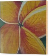 Frangipani Bloom Wood Print
