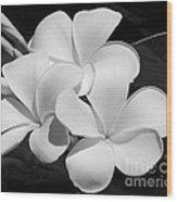 Frangipani In Black And White Wood Print