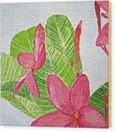 Frangipani Tree Wood Print