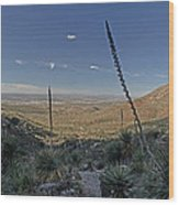 Franklin Mountains Landscape 4 Wood Print