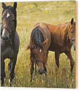 Free Happy Horse Joy On Samsoe Island Denmark  Wood Print