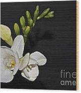 Freesia On Black Wood Print
