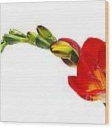Freesia On White Wood Print