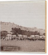 Freighting In The Black Hills. Photographed Between Sturgis Wood Print