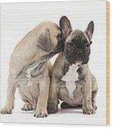 French Bulldog Puppies Wood Print