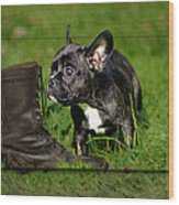 French Bulldogs Wood Print by Heike Hultsch