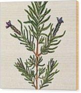 French Lavender Wood Print