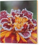 French Marigold Named Durango Red Outlined With Frost Wood Print