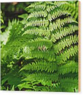 Fresh Fern - Featured 2 Wood Print