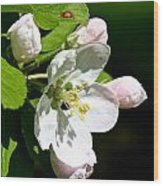Fresh Fruit Blossoms Wood Print
