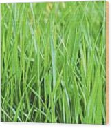 Fresh Grass Wood Print