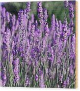 Fresh Lavender  Wood Print
