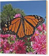 Fresh Monarch Butterfly Wood Print
