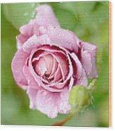 Fresh Morning Rose Wood Print