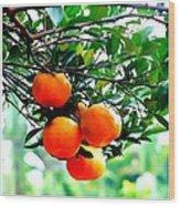 Fresh Orange On Plant Wood Print