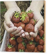 Fresh Picked Strawberries Wood Print