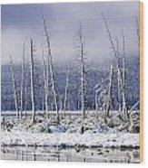 Fresh Snowfall And Bare Trees Wood Print