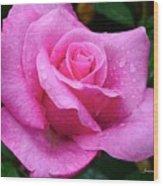 Fresh Sweet Surrender Rose Wood Print