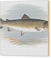 Fresh Water Fish Wood Print