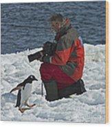 Friend Of The Penguins... Wood Print