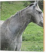 Friendly Gray Horse Wood Print
