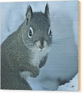 Friendly Squirrel Wood Print