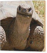 Friendly Tortoise Wood Print