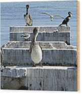 Pelican Friends Wood Print