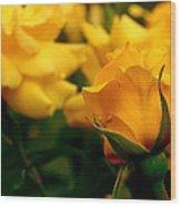 Friendship Roses Wood Print by Rona Black