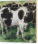 Friesian Cows Wood Print