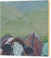 Friesian Holstein Cows Wood Print