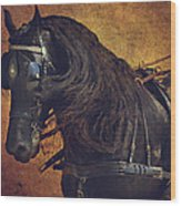 Friesian Under Harness Wood Print by Lyndsey Warren