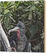 Frigate Bird- Hawaii V2 Wood Print