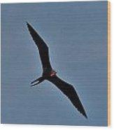 A Frigate Bird Over Costa Maya, Mexico Wood Print