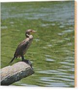 Frigate Bird Watching Estuary Wood Print by Christine Till