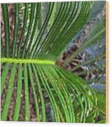 Frillies Wood Print