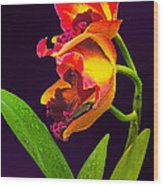Frilly  Red And Yellow Orchids Wood Print