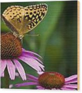 Fritellary On Cone Flower Wood Print