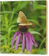 Fritilarie Butturfly On Purple Cone Flower Wood Print