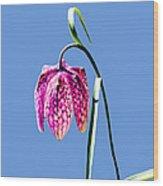 Fritillaria Meleagris - Leif Sohlman Wood Print